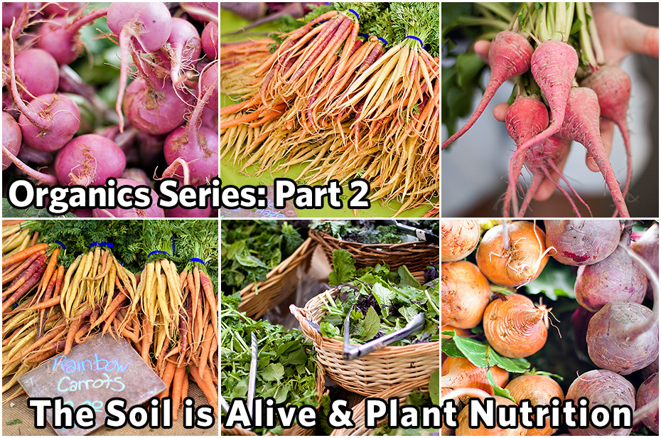 Organics Series - Part 2: The Soil is Alive & Plant Nutrition