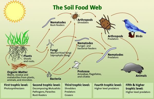 soil-food-web