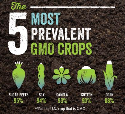 The 5 Most Prevalent GMO Crops